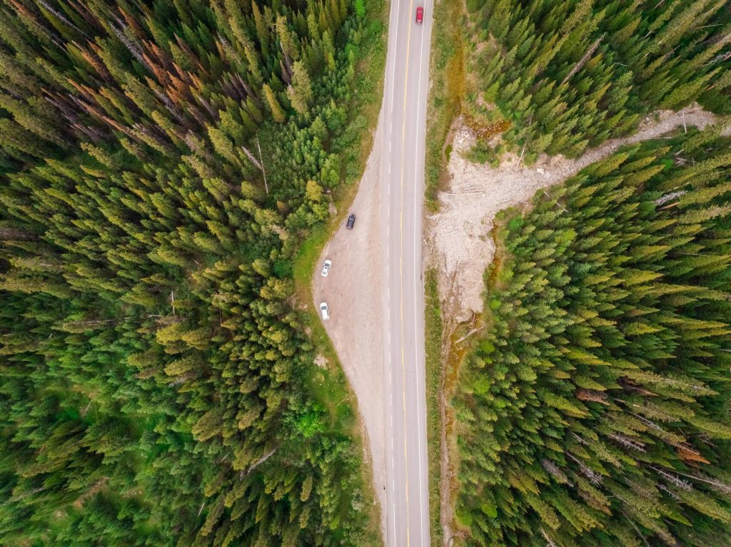 Aerial view of road crossing pine tree forest, Alberta, Canada - AAEF00380